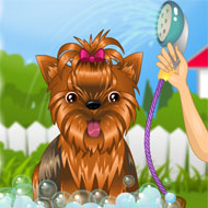 Doggy Day Spa