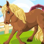 My Brave Horse